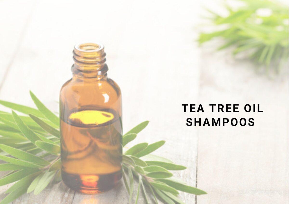 10 Top Tea Tree Oil Shampoo Of 2021