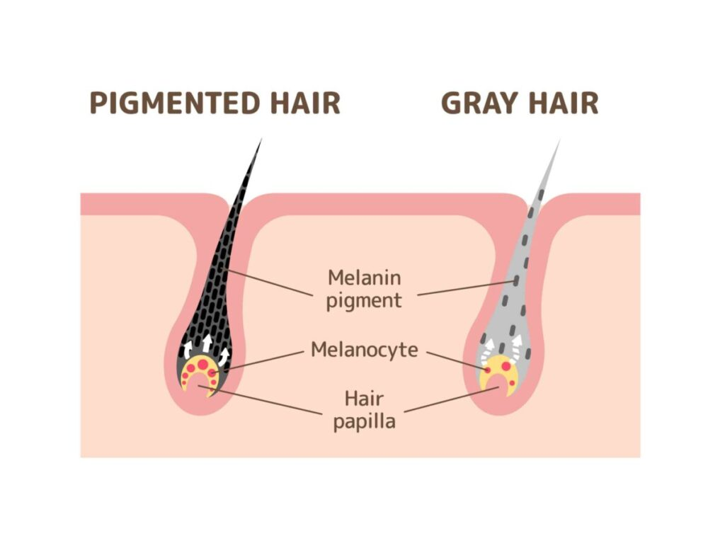 how to turn grey hair into black permanently naturally