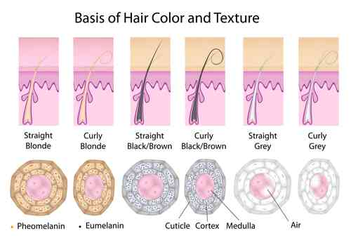 melanin and hair color