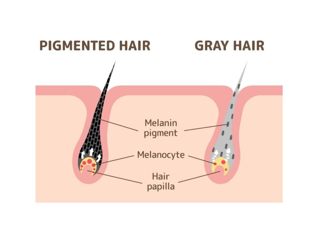 how to increase melanin in hair and skin
